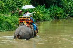 Reis van Thailand-Thailand het centrum Lampang van het olifantsbehoud Royalty-vrije Stock Foto's