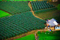 Reis, Vietnam Lizenzfreies Stockbild
