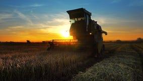 Reis, Weizen, der Schermaschinen erntet stockfoto