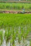 Reisbauernhof stockfoto