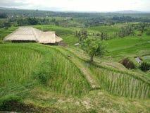 Reisbauernhof Bali Indonesien Lizenzfreie Stockfotos