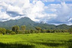 Reisbauernhof im Gebirgshintergrund Lizenzfreies Stockbild