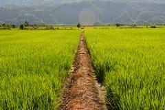 Reisbauernhof im Land Stockfoto