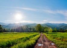 Reisbauernhof mit blauem Himmel stockfotos