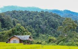 Reisbauernhofansicht Lizenzfreies Stockbild