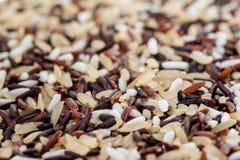 Reisbeeren, Jasminreis, braune Nase, Stapel von ungewalkten Reiskörnern, Reis und fünf Spezies Lizenzfreie Stockfotos