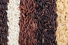 Reisbeeren, Jasminreis, braune Nase, Stapel von ungewalkten Reiskörnern, Reis und fünf Spezies Lizenzfreie Stockfotografie