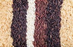 Reisbeeren, Jasminreis, braune Nase, Stapel von ungewalkten Reiskörnern, Reis und fünf Spezies Stockfoto