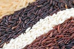 Reisbeeren, Jasminreis, braune Nase, Stapel von ungewalkten Reiskörnern, Reis und fünf Spezies Lizenzfreies Stockbild