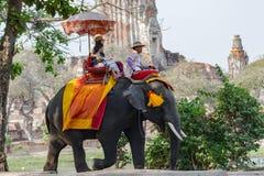 Reise Ayutthaya Thailand, das einen Elefanten reitet Stockbild