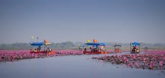 Reise des touristischen Bootes für sehen rosa Lotos Stockbild