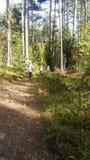 Reise im Wald stockfotos