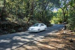 Reise, lange Fahrt und Waldweg Stockfoto