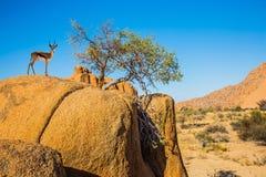 Reise nach Afrika lizenzfreie stockbilder