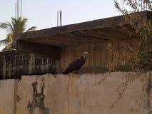 Reise nach Gambia stockfoto