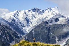 Reise Neuseeland, Berg Fox Szenische Ansicht von südlichen Alpen, von Bergkoch und von Gletschern Kleine Person/touristische Frau Lizenzfreies Stockfoto