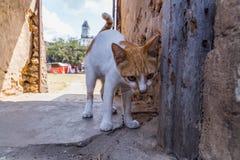 Reise um Afrika Wenig Katze auf der Straße der Steinstadt lizenzfreie stockfotografie