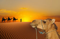 Reise zu den Pyramiden Lizenzfreie Stockfotos