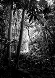 Reise zu einem Wasserfall lizenzfreie stockfotografie