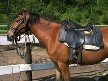Reise zu Pferd Stallion unter Sattel Sommer baikal Lizenzfreies Stockbild