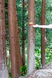 Reisekennzeichen auf Bäumen stockfotografie