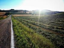 Reisen in die Landschaft bei dem Sonnenuntergang Lizenzfreie Stockfotos