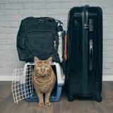 Reisen mit einer Katze - Ingwerkatze, die besorgt von einer Haustierfördermaschine nahe bei einem Koffer schaut lizenzfreie stockfotos