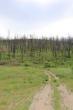 Reisen Sie für den Standort, der für Waldbrandfilme kundschaftet Lizenzfreie Stockfotos