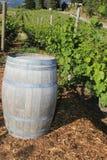 Reisen Sie zu den Weinanbaugebieten von Italien, Frankreich, Spanien, Portugual Lizenzfreies Stockfoto
