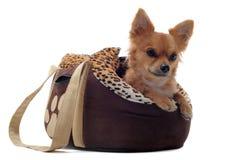 Reisenbeutel und -Chihuahua Stockfotos