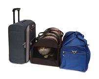 Reisenbeutel und Haustierträger Lizenzfreies Stockfoto