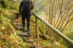 Reisender, der auf Holzbrücke im Wald geht lizenzfreie stockfotos