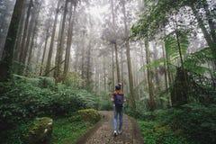 Reisender der jungen Frau, der in den Wald geht stockbild