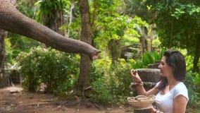 Reisender der jungen Frau, der mit dem Elefanten spielt stock footage