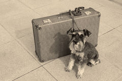 Reisender Hund Lizenzfreie Stockbilder