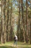 Reisender mit dem Rucksack, der im Wald steht Lizenzfreies Stockfoto