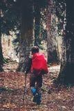Reisender mit dem Rucksack, der im Wald wandert Stockfotos