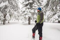 Reisendstillstehen, stehend unter den schneebedeckten Kiefern Stockbild