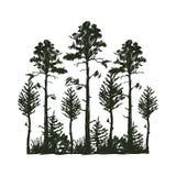 Reiseschwarz-Schattenbildes des Baums des im Freien zapfentragender natürlicher Ausweis, Oberteilekiefernfichtenzweigzeder und Be Stockbild