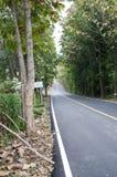 Reisestraße zum Berg mit Bäumen beide Seiten Lizenzfreie Stockfotos