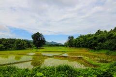 Reisfeld über dem Gebirgszug Stockbilder