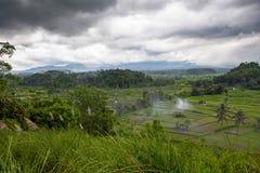 Reisfeld auf dem Bauernhof im Dschungel bereitete sich für die Landung vor Stockfoto