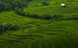 Reisfeld auf terassenförmig angelegtem. Lizenzfreie Stockfotografie