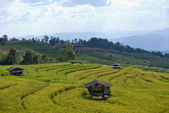 Reisfeld auf terassenförmig angelegtem Berg. Lizenzfreie Stockbilder