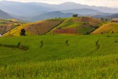 Reisfeld auf Terrasse stockbilder