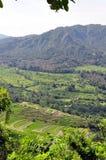 Reisfeld in Bali Lizenzfreie Stockfotos