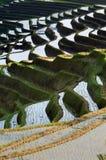 Reisfeld Bali Stockbild