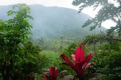 Reisfeld Bali mit Wolken und Palmen lizenzfreies stockbild