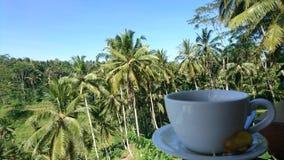 Reisfeld Bali-Tasse Tee Lizenzfreie Stockbilder