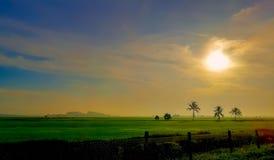 Reisfeld bei Sonnenaufgang lizenzfreie stockfotos